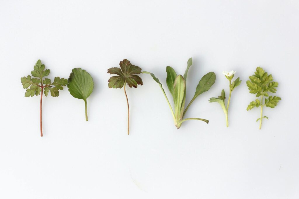 Herbs and nutrients to help with autoimmune diseases